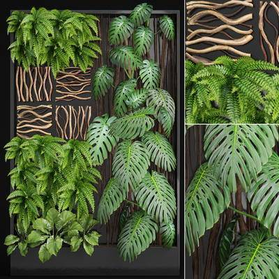 现代蕨类植物墙, 植物, 植物墙, 现代, 蕨类植物