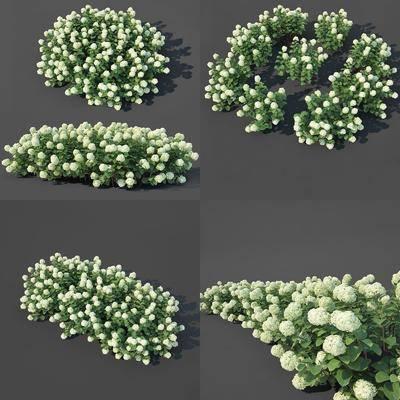 花草植物, 绿植植物, 现代