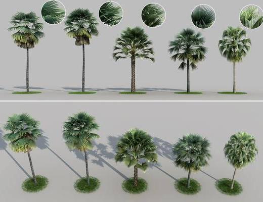 树木, 树