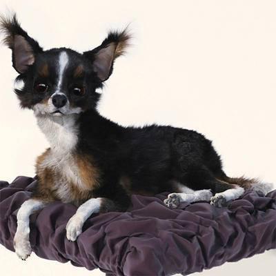 沙发凳, 动物, 狗, 现代, 宠物
