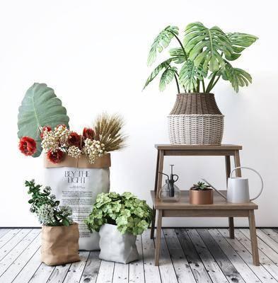植物盆栽, 盆栽组合, 绿植植物, 花架组合, 摆件组合, 北欧