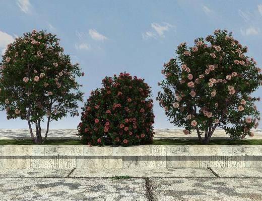 柳树植物,绿化植物,景观植物, 大树,花草植物