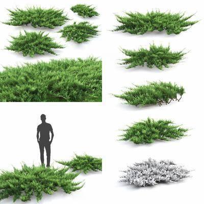 灌木, 植物, 草, 现代灌木, 现代, 绿植