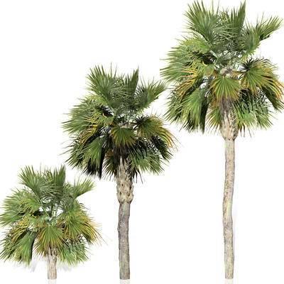 棕榈树, 植物, 景观园林