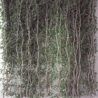 藤蔓, 植物墙, 植物