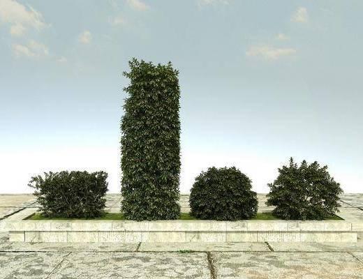 有造型植物, 绿化植物, 景观植物, 开花植物, 花草植物