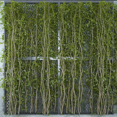 清新藤蔓, 绿植植物, 植物墙, 现代