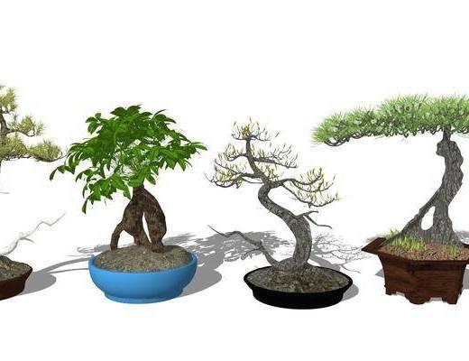 盆栽植物, 花草组合