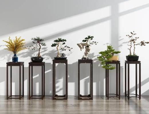 花架, 植物, 盆景