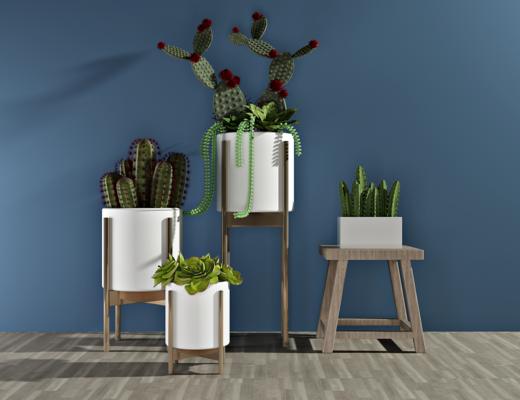 绿植, 盆栽, 植物, 现代, 仙人掌, 装饰品