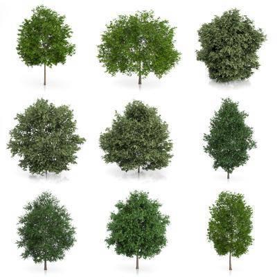 树木, 灌木, 室外植物, 绿植, 树叶, 现代, 现代树木