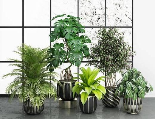 绿植组合, 盆栽, 植物, 摆件