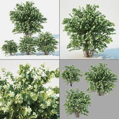 绿植灌木, 绿植植物, 现代