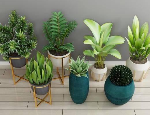 现代绿植, 绿植, 盆栽