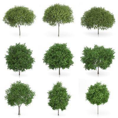 树木, 灌木, 现代树木, 树叶, 现代