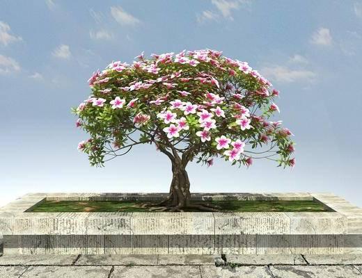 景观, 绿化, 植物