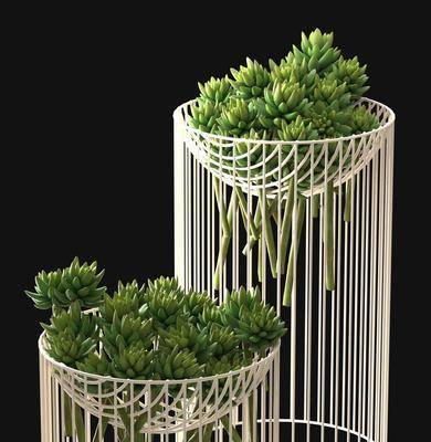 盆栽, 花架, 现代