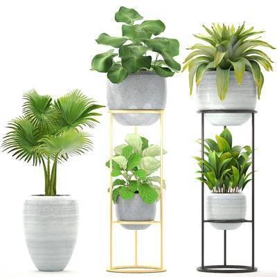 植物, 盆栽, 花架, 现代, 绿植
