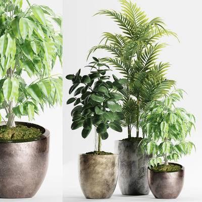 现代, 绿植, 盆栽