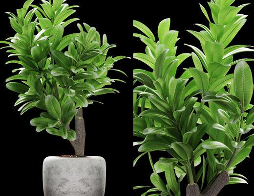 高品质植物3d模型, 盆栽, 植物, 叶子, 绿色