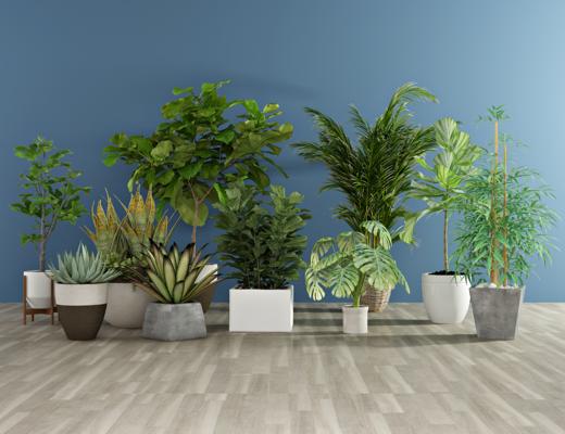 绿植, 盆栽, 现代植物, 摆件, 花草