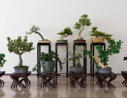 植物, 盆栽, 装饰架, 新中式