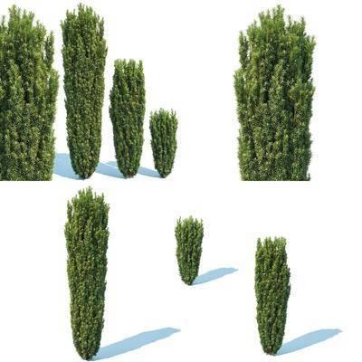 灌木树木, 绿植植物, 现代