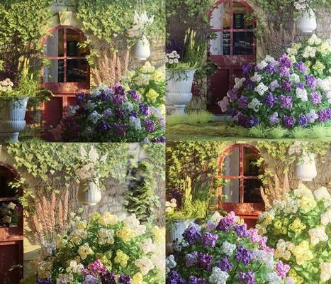 户外, 花卉, 植物, 绿植, 藤蔓, 花盆, 现代