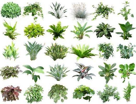 花草, 植物, 花卉, 绿植组合