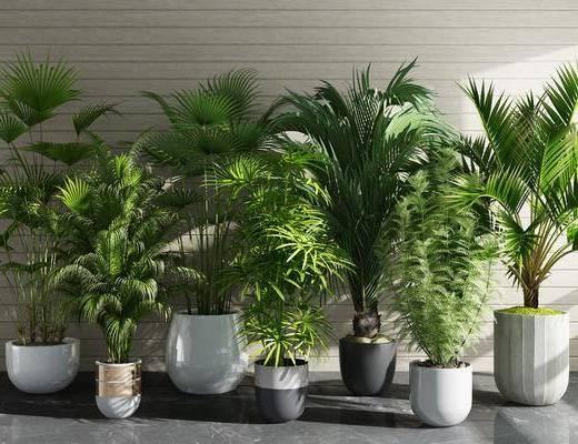 室内植物, 盆栽组合, 绿植, 现代