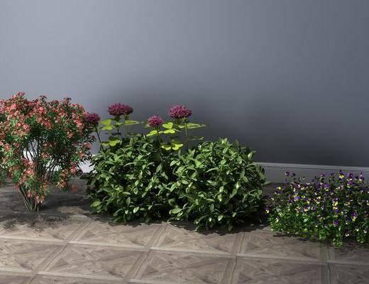 灌木, 植物, 花草