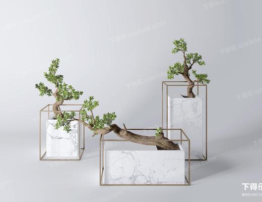 植物, 盆栽, 绿植, 摆件, 陈设品