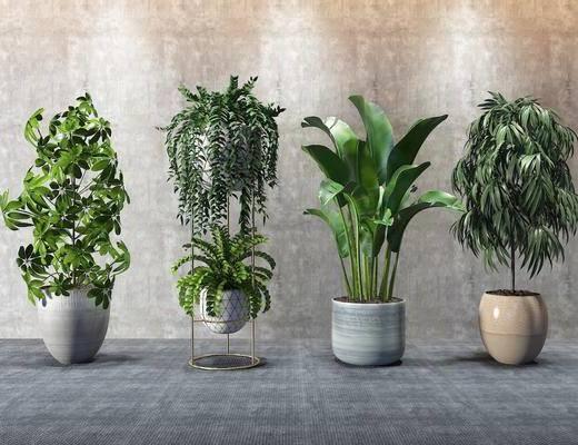 盆栽, 绿植, 现代绿植盆栽