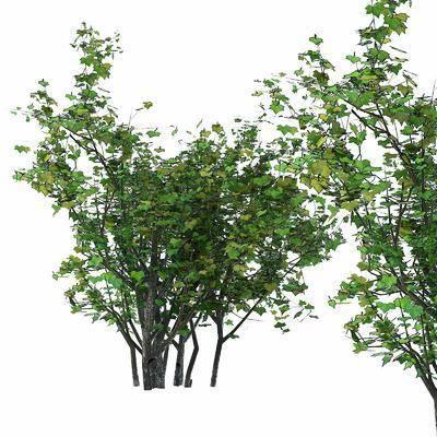 树叶矮灌, 植物绿植, 现代