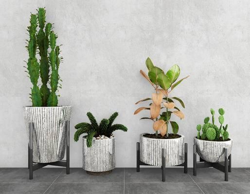 盆栽, 植物, 绿植, 现代, 仙人掌