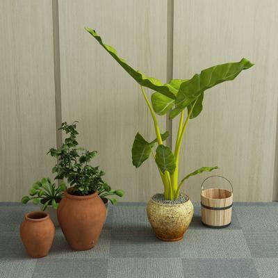 盆栽, 植物, 绿植, 现代盆栽, 室内, 现代