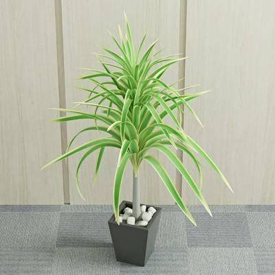 盆栽, 绿植, 植物, 现代