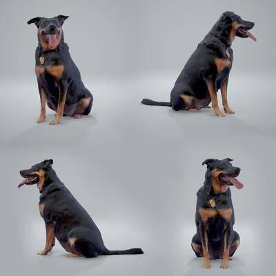 宠物狗, 狼狗, 现代