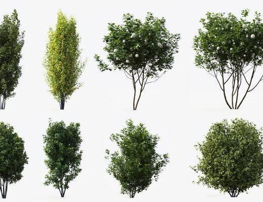 绿植, 树木, 花草