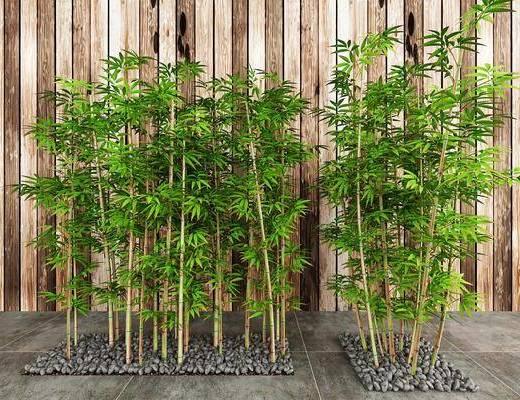 室外竹子, 绿植, 现代
