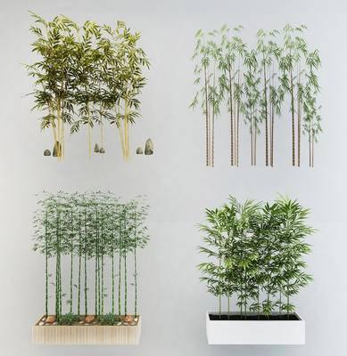 竹子, 竹叶, 植物, 盆栽