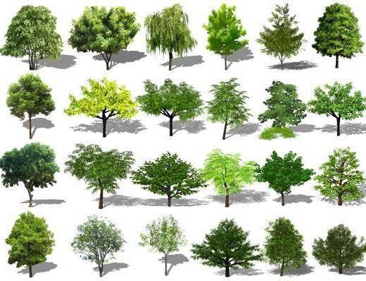 树木, 植物, 灌木组合