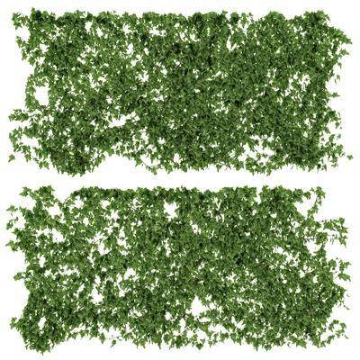 藤蔓, 植物, 現代