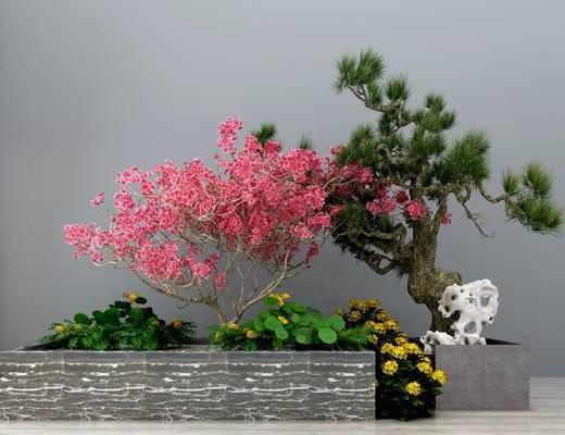 盆栽, 松树, 绿植, 植物, 园林小品