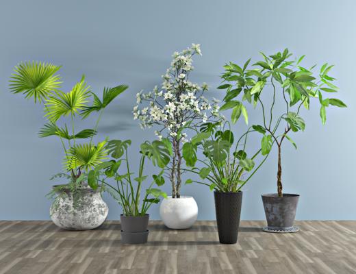 现代龟背竹盆栽, 室内绿植, 花盘, 植物