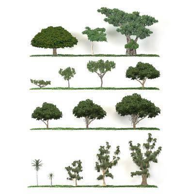 树木, 户外, 植物, 绿植, 现代, 现代树木