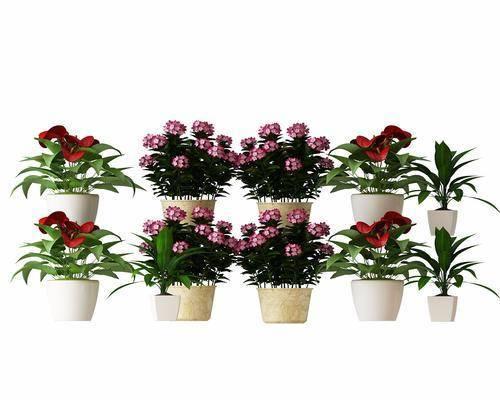 花草, 盆栽, 现代