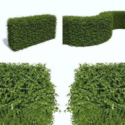 灌木丛, 树木, 现代