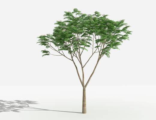树木, 植物, 绿化植物, 景观植物, 花草