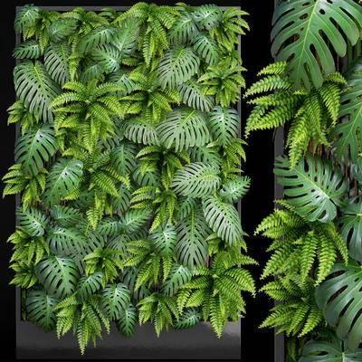 植物墙, 植物, 现代植物墙, 现代